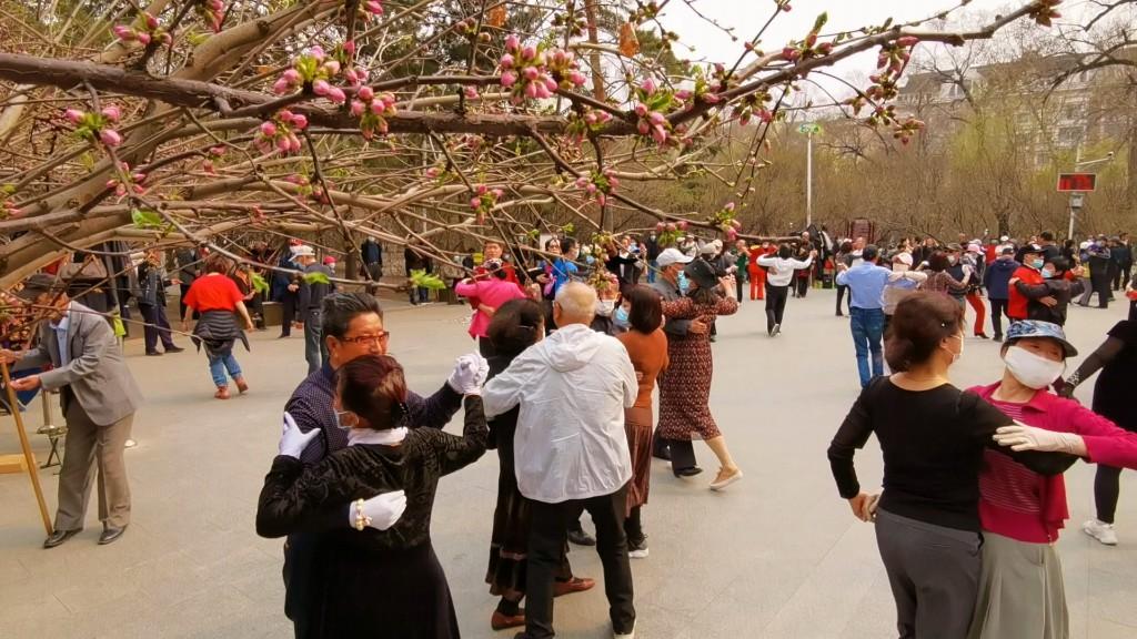 随着京桃花和杏花相继开放,哈尔滨处处洋溢着浓浓春色。在哈市的公园、广场和街路的绿化带,一簇簇京桃花和杏花随风飘来阵阵花香。在公园,人们伴着花香翩翩起舞,享受久违的春意。