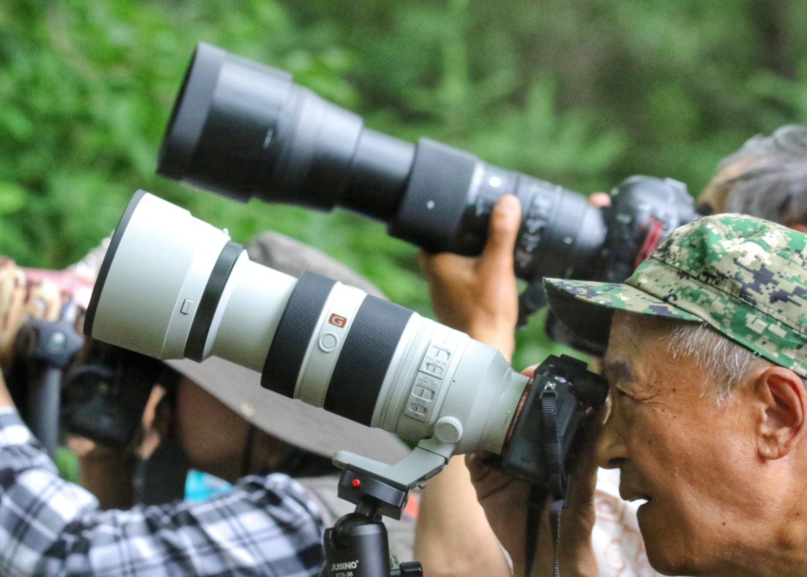 7月,各种候鸟进入育雏期。在哈尔滨市太阳岛湿地、呼口湿地、外滩湿地、一湖三岛湿地、阿勒锦岛国家湿地公园以及兆麟公园等地,经常能看到成群结队手持长焦镜头的拍鸟人守在一处处绿荫下,拍戴胜、鸳鸯、中华攀雀、凤头䴙䴘等候鸟跳巢、育雏的画面。