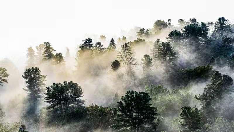 山峦叠翠,万倾林海,这里就是黑龙江丰林国家级自然保护区。清晨的山上云雾缭绕,似水墨丹青,宛若仙境。