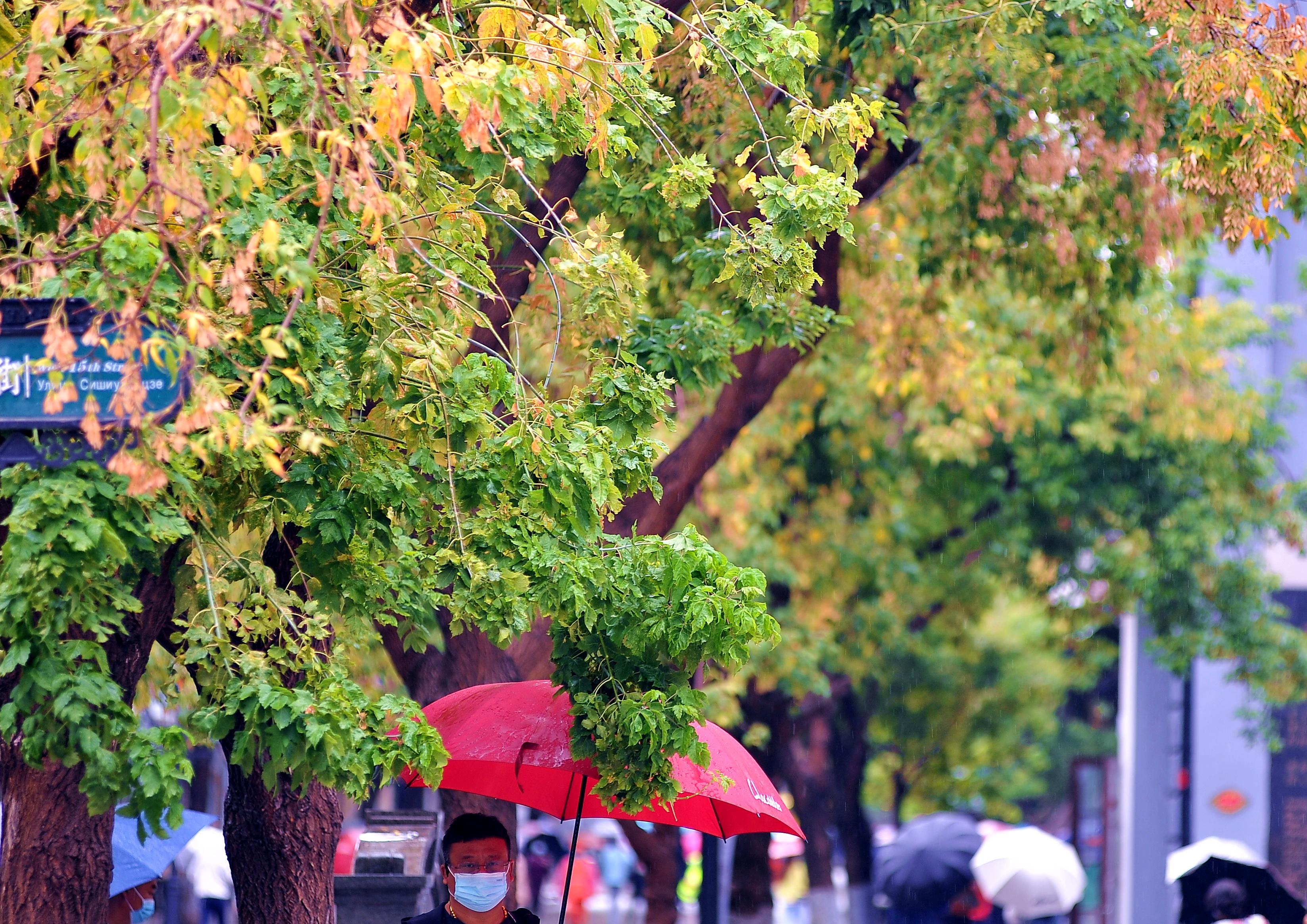 7日早晨,哈尔滨下起了雨,一场秋雨一场凉,气温也明显下降。道里区中央大街上,市民和游客们撑伞出行;街两旁的树木也都显露出了秋天的颜色,一些黄叶被雨水打落在地。